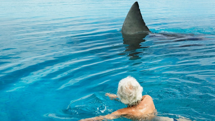 When To See Dolphins In Myrtle Beach